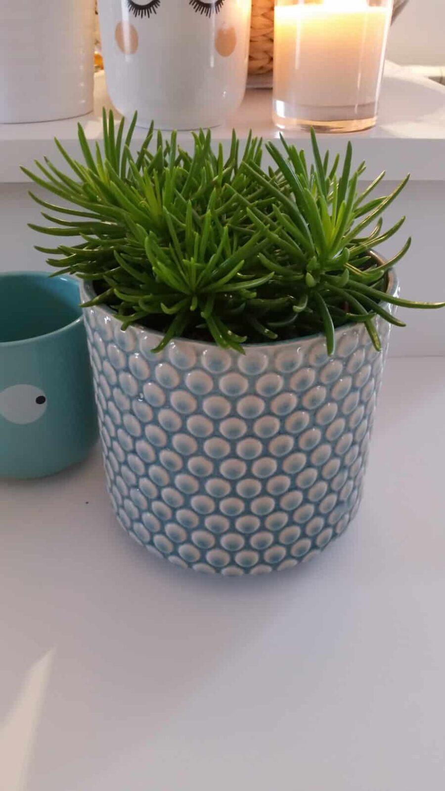 cache pot bloomingville bulles turquoise pastel shop. Black Bedroom Furniture Sets. Home Design Ideas