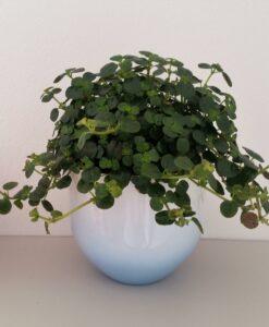 Cache-pot Bloomingville tye/dye