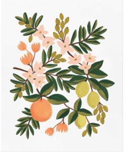 Affiche Rifle Paper Co Citrus Floral