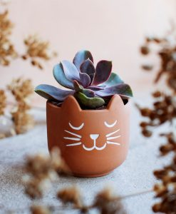 Petit pot chat Sass and Belle Terracotta