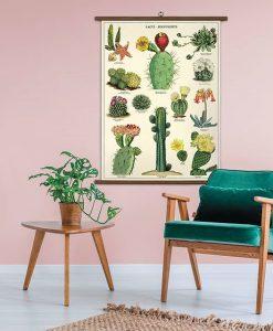 Affiche pédagogique Cactus et succulentes 2 Cavallini