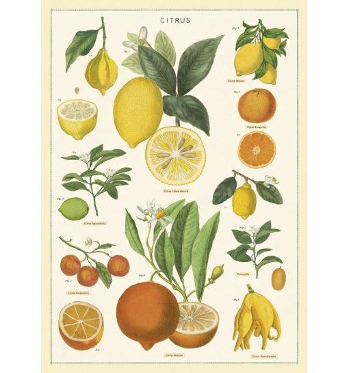 Affiche pédagogique Citrons Cavallini