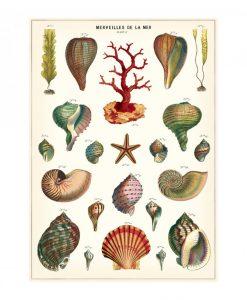 Affiche Merveilles de la mer Cavallini
