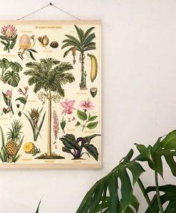 Affiche pédagogique Plantes tropicales Cavallini