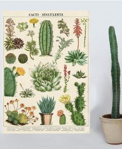 Affiche pédagogique Cactus et succulentes Cavallini
