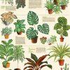 affiche plantes house plants cavallini