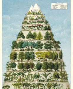 Affiche Pyramide des Arbres Cavallini