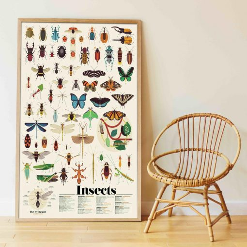 Poster géant + 44 stickers – Insectes